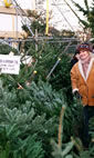 Christmas Trees: The Christmas Forest, Putney London