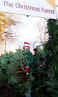 Christmas Trees: The Christmas Forest, Islington photo